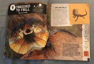 Scaly, Slippery Reptiles (2)