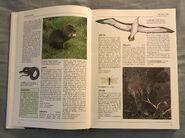 The Kingfisher Illustrated Encyclopedia of Animals (2)