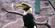 Chester Zoo Hornbill