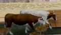 Evan Almighty Cattle
