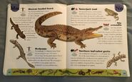 Reptiles and Amphibians Dictionary (16)