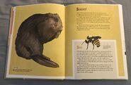 The Dictionary of Ordinary Extraordinary Animals (5)