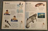 The Kingfisher First Animal Encyclopedia (61)