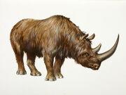 Wooly Rhino.jpg