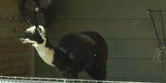 Audubon Zoo Alpaca
