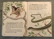 Awesome Animals (Road to Reading) (5)