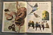 DK Encyclopedia Of Animals (49)