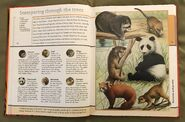Fantastic World of Animals (22)