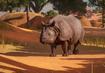Indian-rhinoceros-planet-zoo