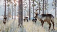 PZ Reindeer