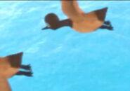 PawPatrol Canada Goose