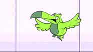TTG Toucan