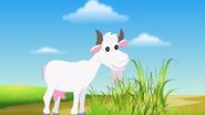 Appu Goat