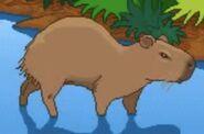 BTKB Capybara