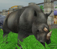 Black-rhinoceros-zoo-empire