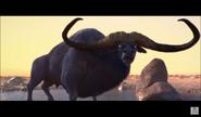 Buffalo in Lion (2019)