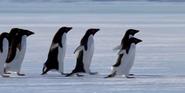 Earth 2009 Penguins