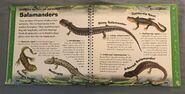 Incredible Reptiles and Amphibians (Valerie Davies) (9)