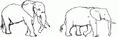 Male and Female Elephants