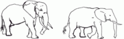Male and Female Elephants