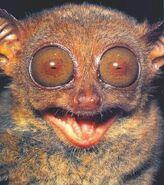 Philippine tarsier smile