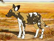 Rileys Adventures African Wild Dog