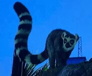 Ring-Tailed Lemur ZTX