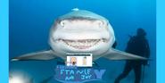Stanley and joy meet a shark