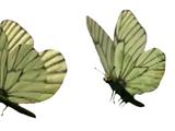 Butterflies (Teletubbies)