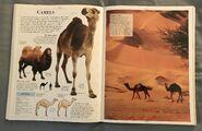 DK Encyclopedia Of Animals (52)