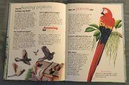I Wonder How Parrots Can Talk (11)