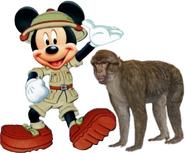 Mickey Meet's Barbary Maquace