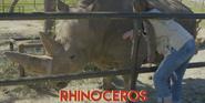 Natural Bridge Wildlife Ranch Rhino