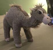 Oasis the Dromedary Camel