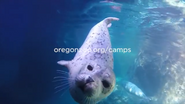 Oregon Zoo Seal
