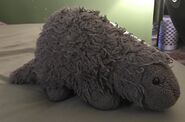 Penny the Porcupine