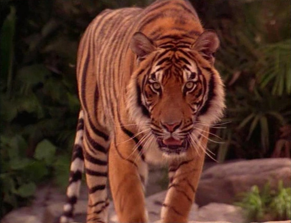 Shere Khan (Rudyard Kipling's The Jungle Book)