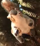 SML Squirrel