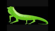 Safari Island Iguana
