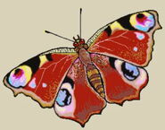 Butterfly-erinv