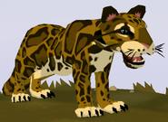 Clouded Leopard WOZ