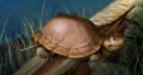 Jumpstart Turtle