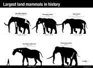 Mastodon Elephants vs Paraceratherium Rhinos