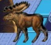 Moose reader rabbit 1st grade