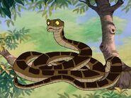 Rileys Adventures Indian Python
