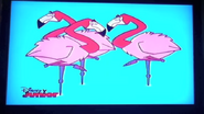 Stanley Flamingos