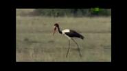 UTAUC Stork