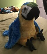 Aang the Macaw