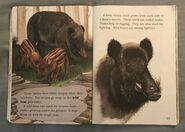 Awesome Animals (Road to Reading) (8)