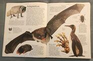 DK Encyclopedia Of Animals (18)